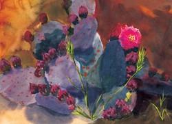 Cactus Cards Beaver Tail