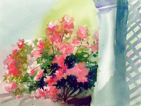 Prints | Rose Garden | Rainy Day Roses