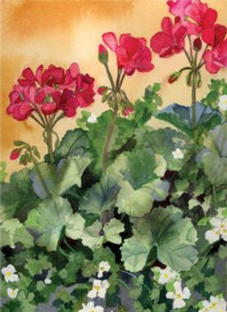Blossoms Cards Geraniums