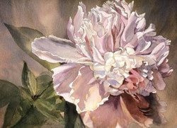 Watercolors of Flowers Cards Peony