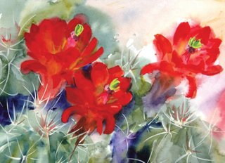 Cactus Cards Claret Cup in Bloom