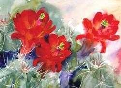 Cactus Cards Claret Cup in Bloom