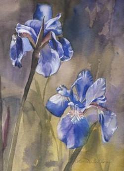 Watercolors of Flowers Cards Siberian Iris