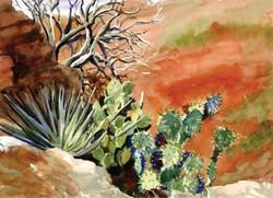 Cactus Cards on Mt Lemmon Trail