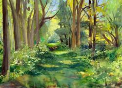 Woodlands Cards Pompey Woods