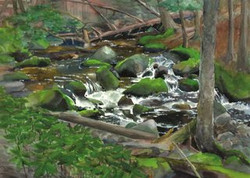 Adirondack Water Cards Mossy Rocks