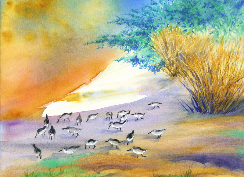 Watercolors Cards Sandpipers