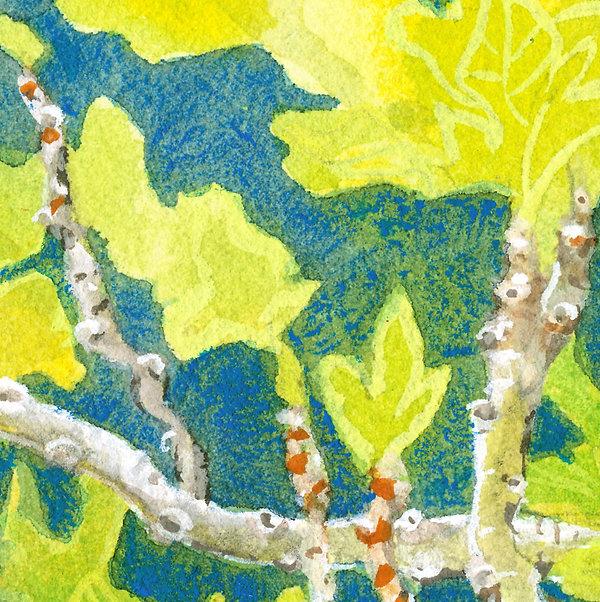 Greece Kalymnos Fig Tree Detail.jpg