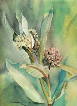 Watercolors of Flowers Cards Milkweed