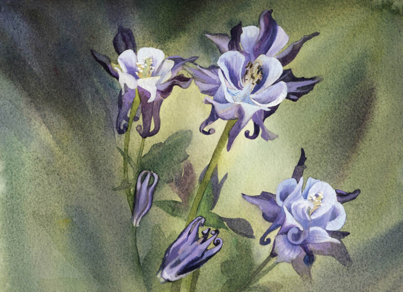 Watercolors of Flowers Cards Columbine