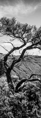A trees Way.jpg