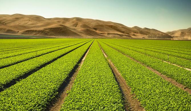 Permaculture, agroécologie, agriculture bio : quelles différences ?