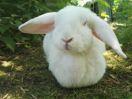 Cruelty Free Hairdressing – Why It's Important.  This is the story of Liberty the Bunny