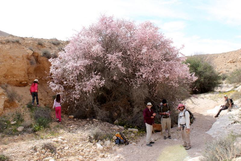טיולים ברגל במדבר - נחל אליאב
