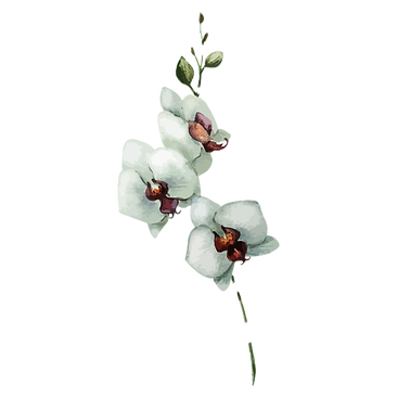 White Flowers_edited.png
