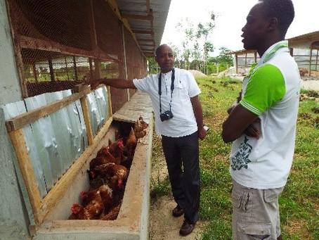 Du cacao au poulailler : quand le commerce équitable accompagne la diversification