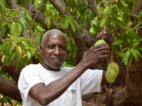 Filière fruits : des projets innovants portés par les coopératives de commerce équitable