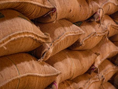 Crise du cacao en Côte d'Ivoire : plus de 150 000 tonnes d'invendus