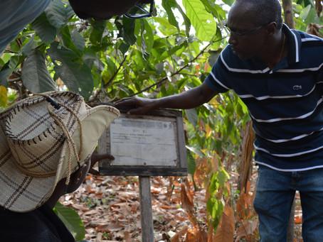 Allier commerce équitable et production agroécologique : la démonstration par la preuve chez CAMAYE