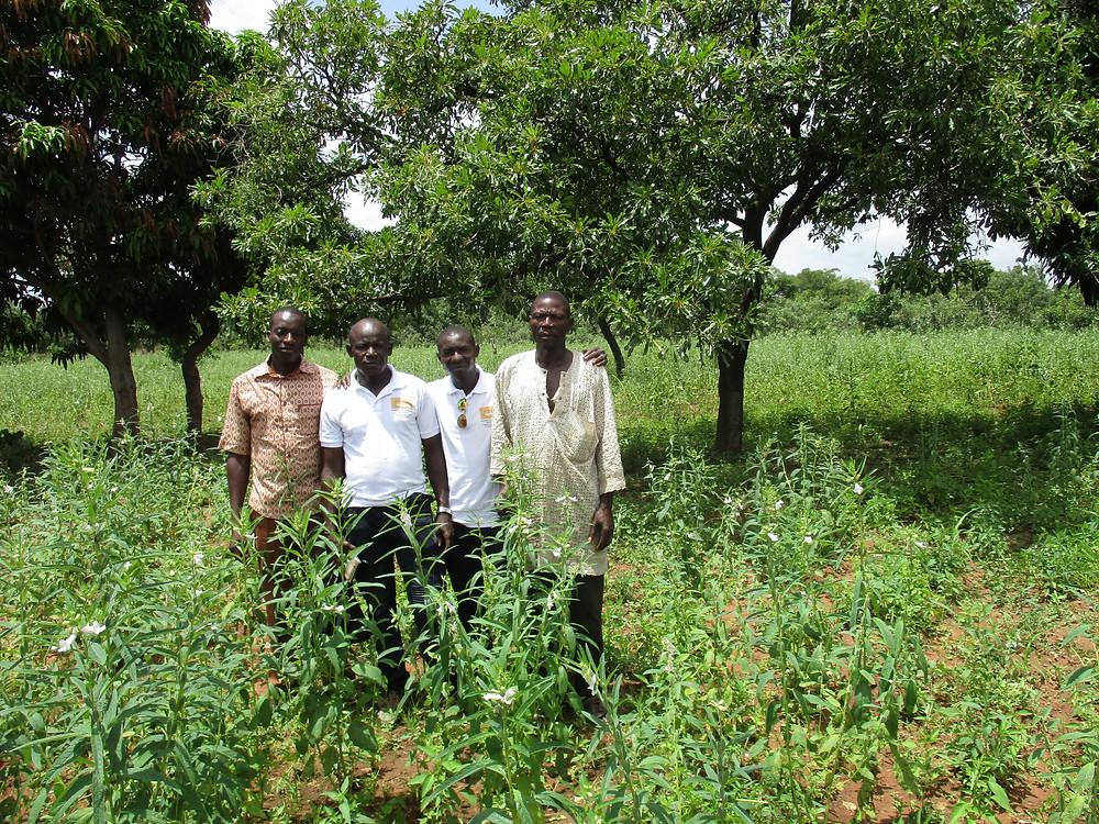 Champs-école paysan de la COOPAKE (association karité-sésame) en présence de son propriétaire, M. BARRO Daouda (à droite) et de l'équipe de la COOPAKE