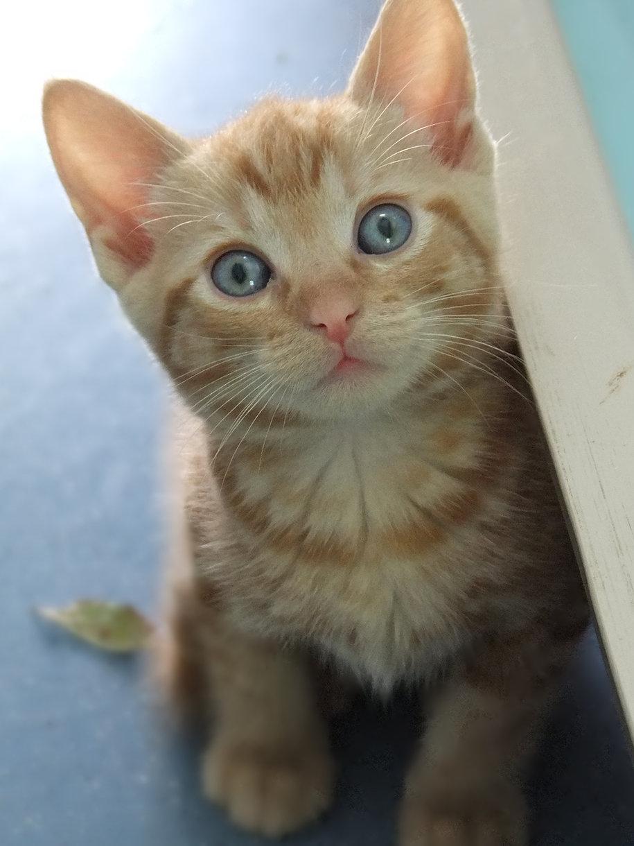 Mazari kittens (13).JPG