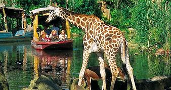 950x500-attraktionen-giraffe-erlebnis-zo
