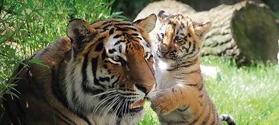 http___www.zoo-hannover.de_dam_jcr_a99a4