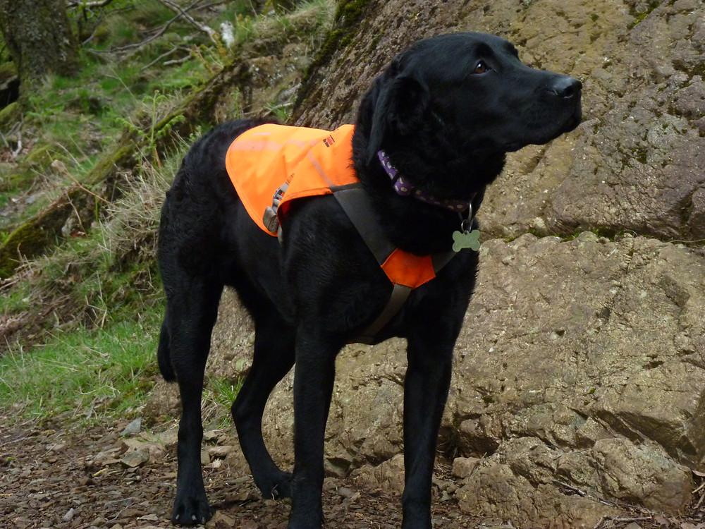 Lexi in her Ruffwear Track Jacket