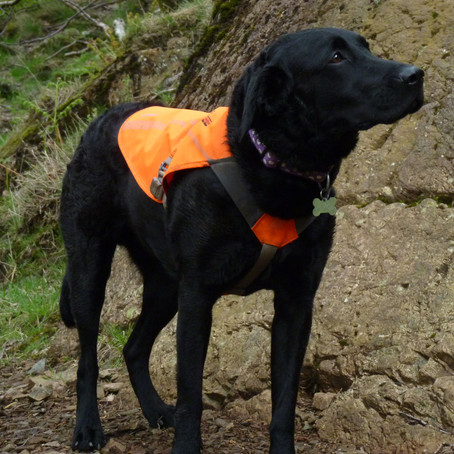 Ruffwear Track Jacket Product Review