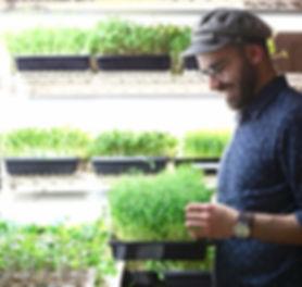Saba Nazarian, Sabzy Greens, Urban Farmer, Microgreens, Indoor faming, Vertical farming, Agripreneur