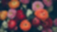 זרי פרחים כלניות