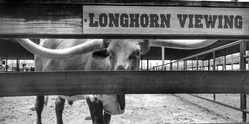 From Steer to Street Art: A Photographic Journey Through the Lone Star State