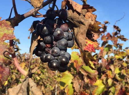 Kosher Italian Wine Tour: Rome