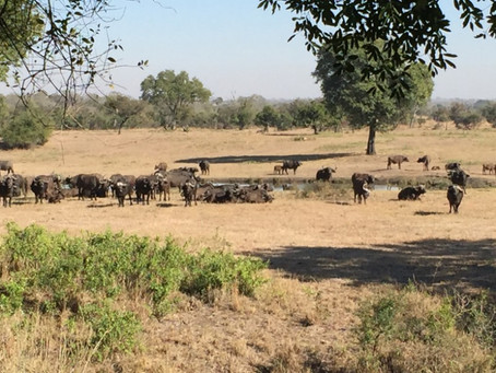 A Great Kosher African Safari