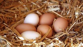 thumbnail_missing-eggs_Johnida-Dockens.j