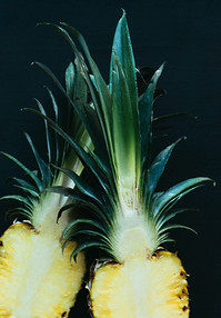 pineapple-supply-co-KghnkehFZqY-unsplash