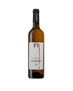 malvasia copy.jpg