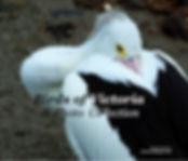 Birds of Vic.jpg