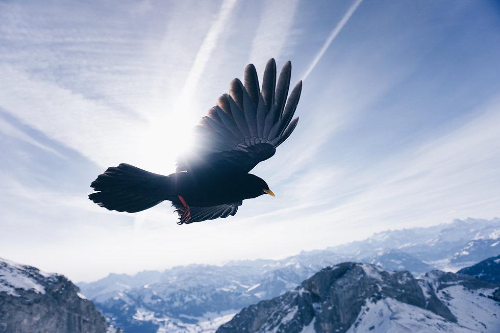 鷹飛ぶ.jpg