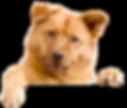 cachorro6.png