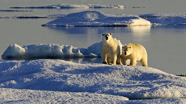 ArcticPolarBears2.jpg