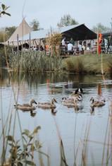 Geese 1.jpeg