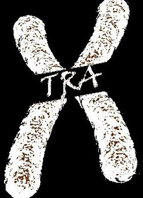 Xtra B&W.png