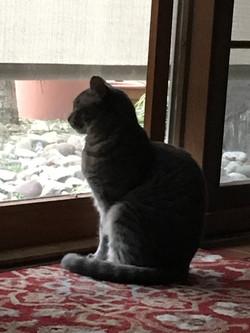 Kitty Zen