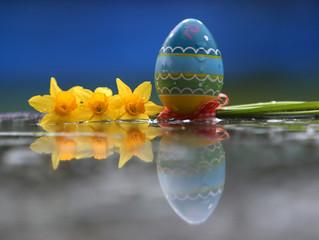 Narzissen mit Osterei mit Wasserspiegelung 3