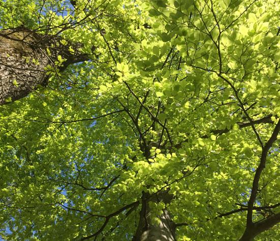 Baum mit grünen Blättern