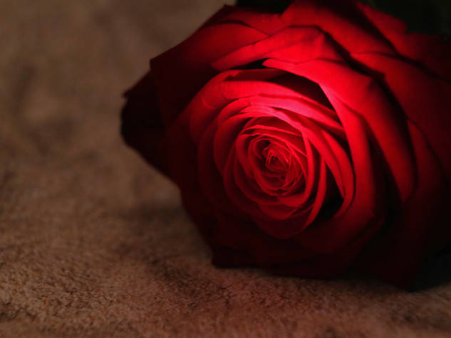Rose im Sand 1