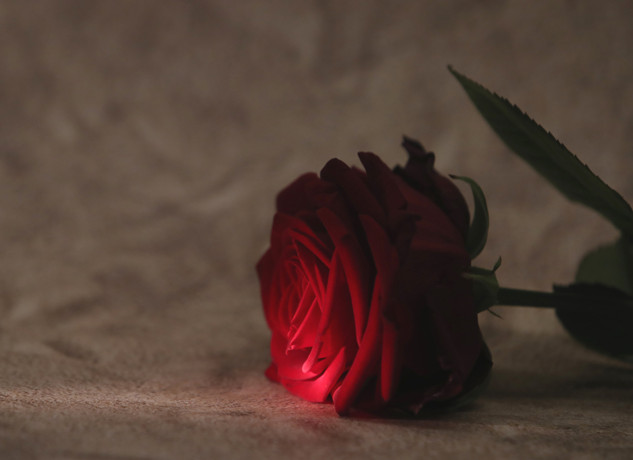 Rose im Sand 2
