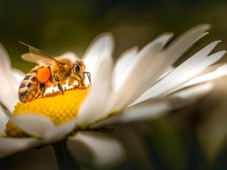 Eine Biene auf Blume