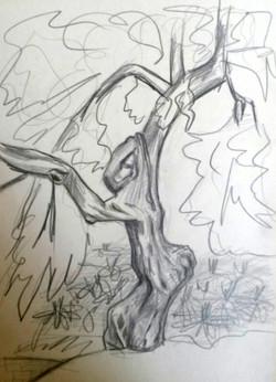 | sketch | olive tree |